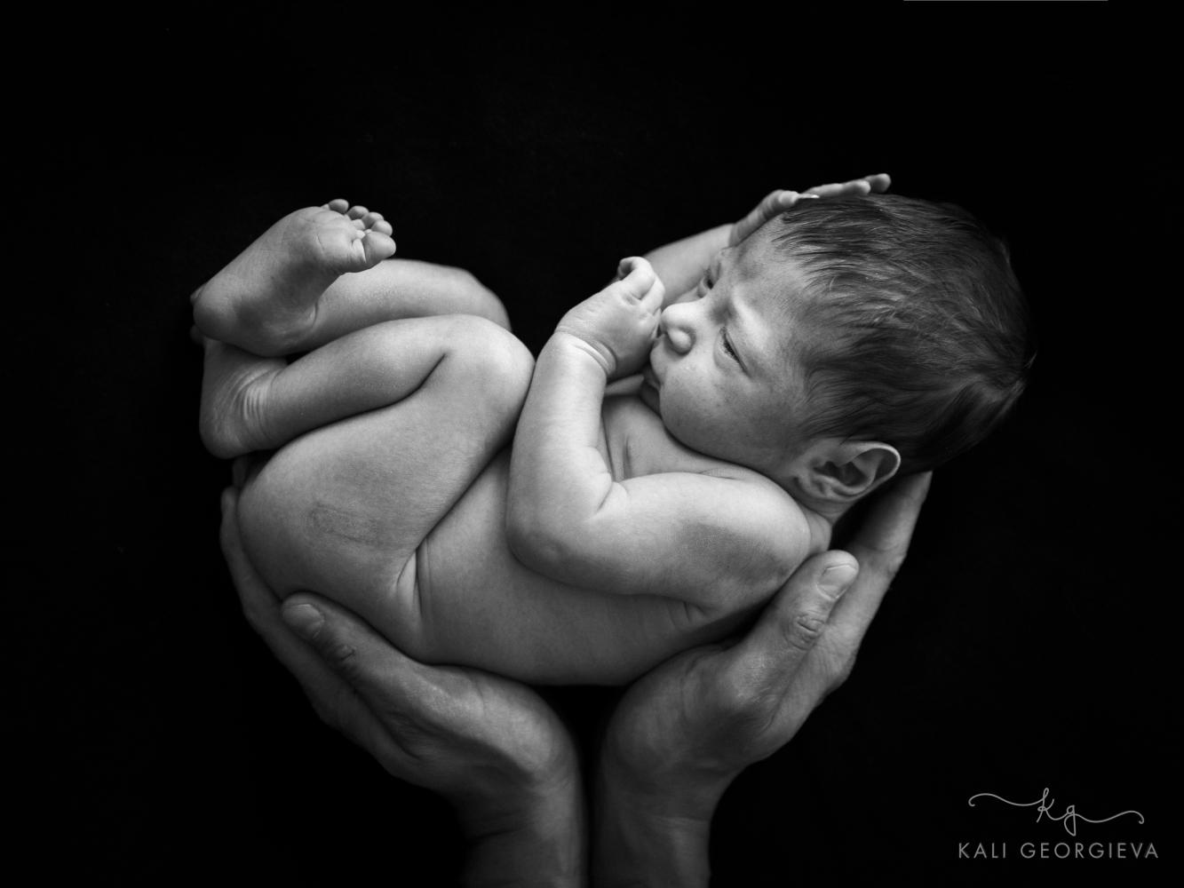 Форосесия бебе